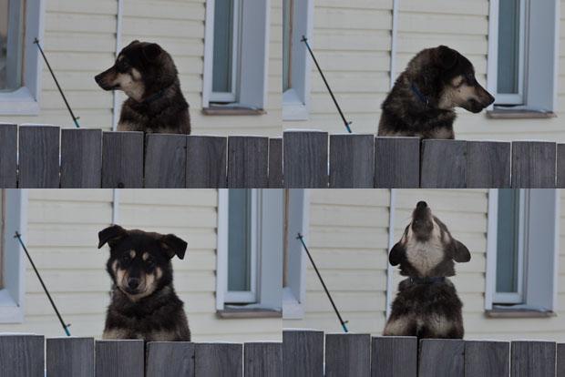 Забавный пёсик