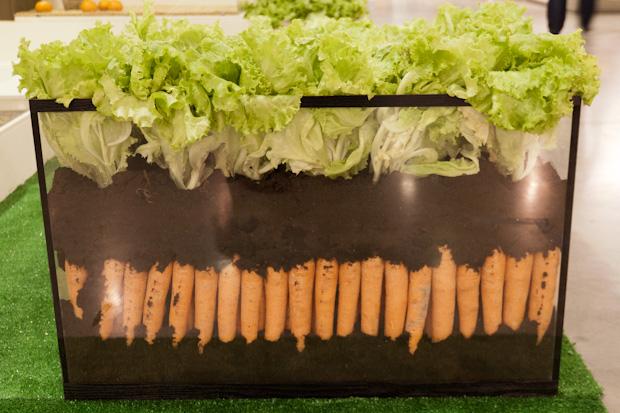 гибридная марковка или салат