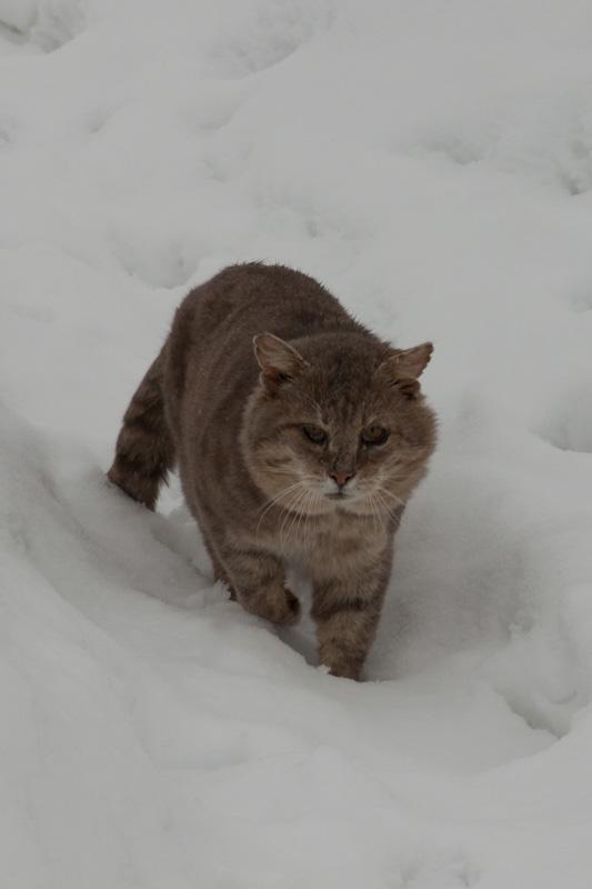 котик в снегу