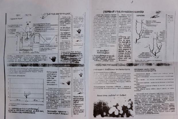 инструкция по выращиванию винограда