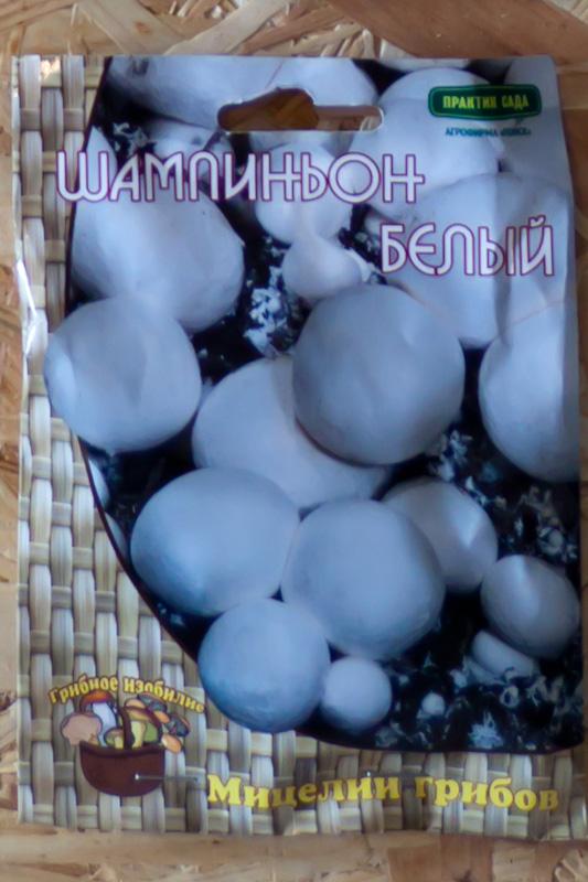 шампиньон белый мицелин грибов