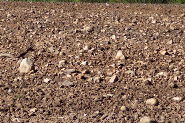 камни на поле