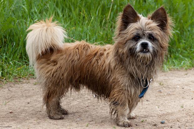 бездомная собака в Савельево