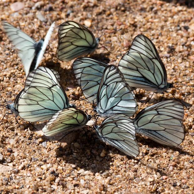 бабочки на солнышке