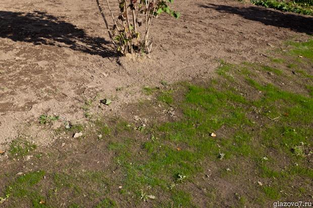 газон сохраняет влагу
