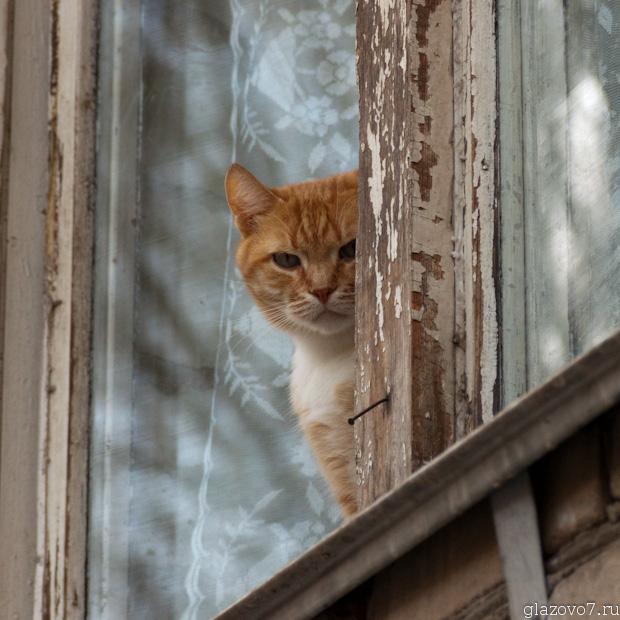суровый котик