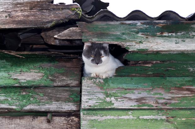 Кошка на чердаке