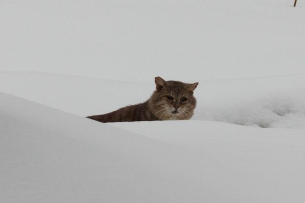 котик выглядывает