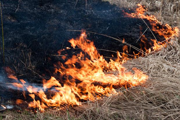 горит трава
