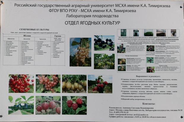 отдел ягодных культур