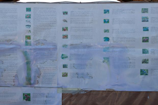 прайс на рассаду в Тимирязевской академии