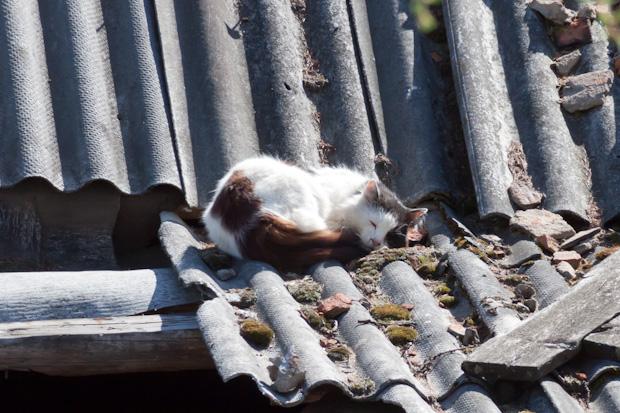 Тише, кот на крыше