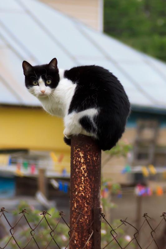кот сидит на столбе