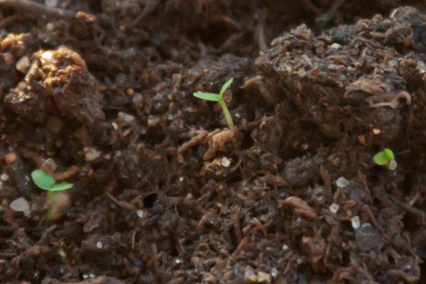 ростки из земли