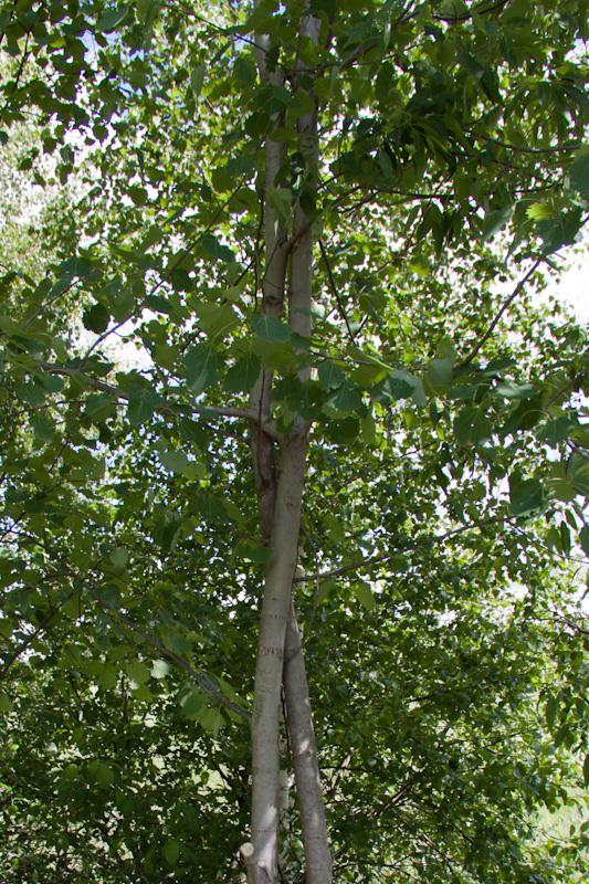 скрученные деревья