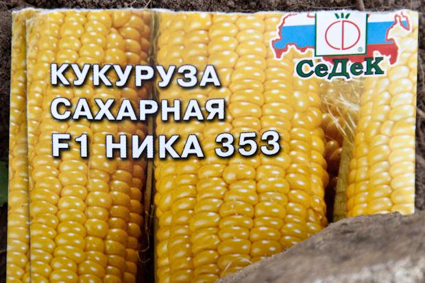 кукуруза сахарная F1 ника 353