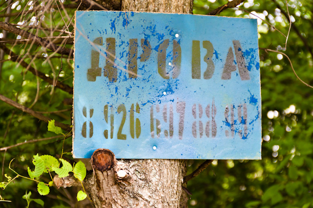 объявление прибили к живому дереву