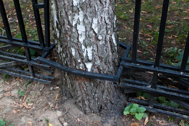 дерево вписалось в забор