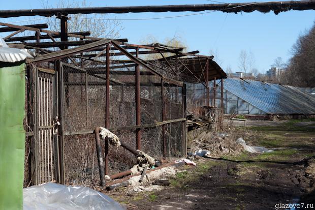теплицы Тимирязевской академии