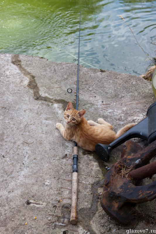 котику захотелось рыбки