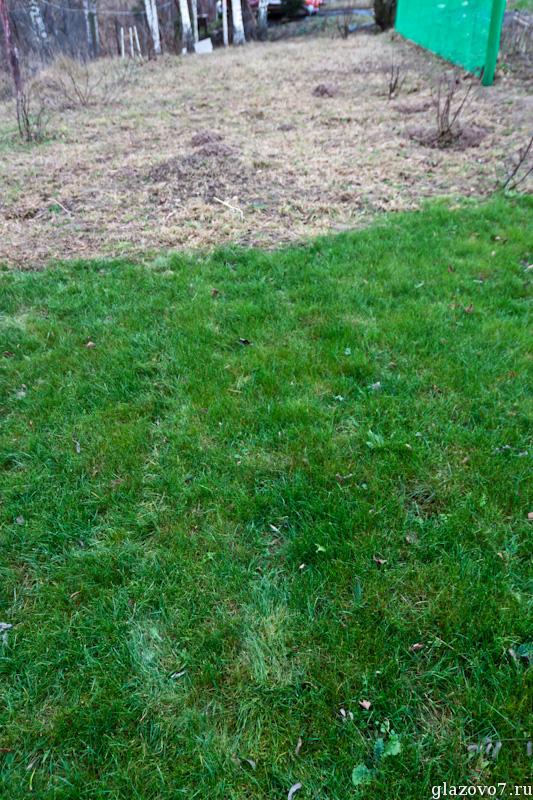 газон на участке