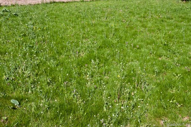 не подстриженный газон на даче