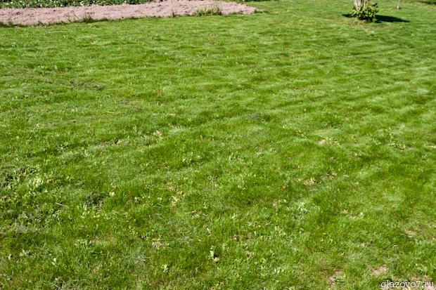 подстриженный газон на даче
